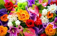 Colorful Flowers Wallpapers - HD Images New | colourful ...