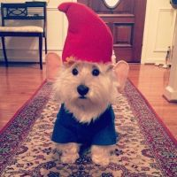 The cutest garden gnome you ever did see. | Dog halloween ...