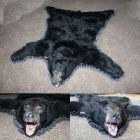 Black Bear Skin Rugs for Sale | Brown Bear Rug : Bills ...