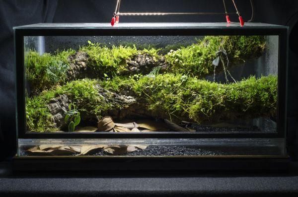 10 Gallon Front-opening Conversion Epiphyte Branch Vivarium Aquariums Fish Tanks