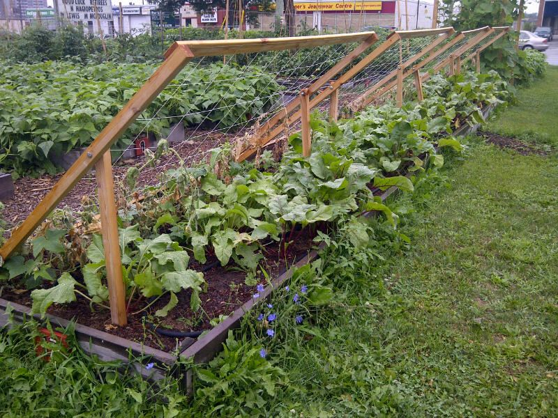 How To Build A Cucumber Trellis Shade Trellis This Simple