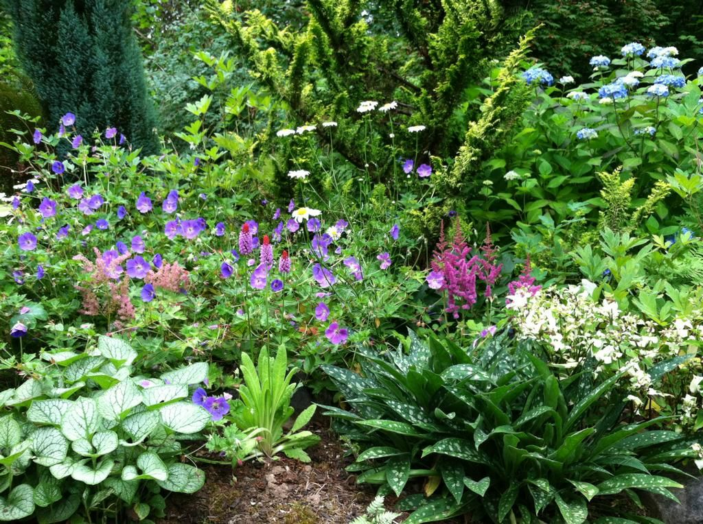 Peonies Landscaping Ideas Photo Gallery For Perennial