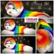 creative grooming opawz pet