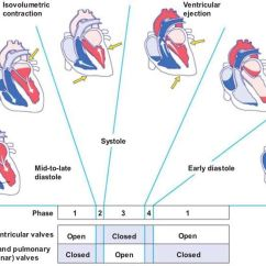 Cardiac Conduction System Diagram Speedfit Underfloor Heating Wiring Image Cycle For Term Side Of Card Love Being A