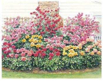 Easy Care Rose Garden Plan Gardens Lady And Smalls
