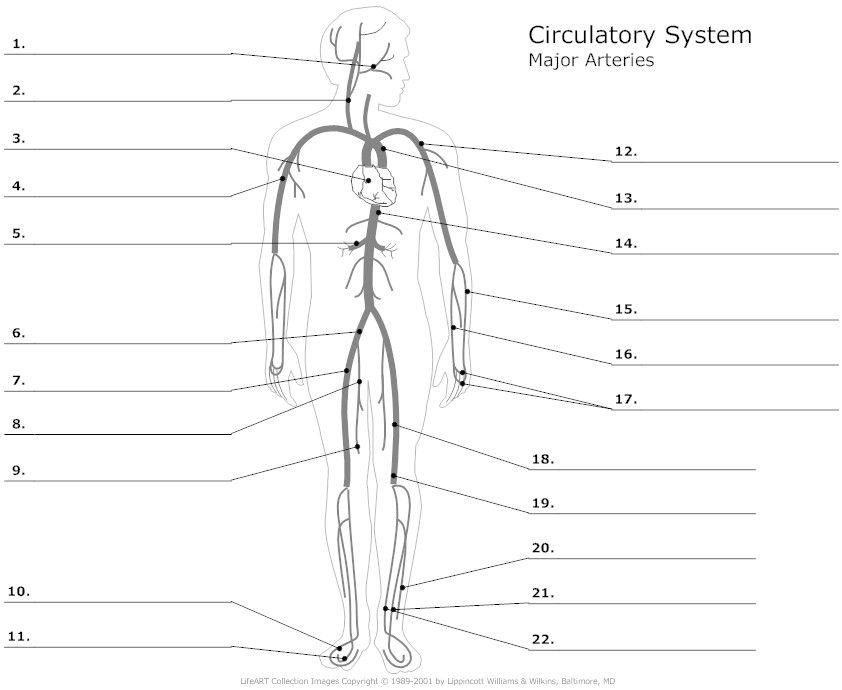 Medical Terminology Practice Worksheets