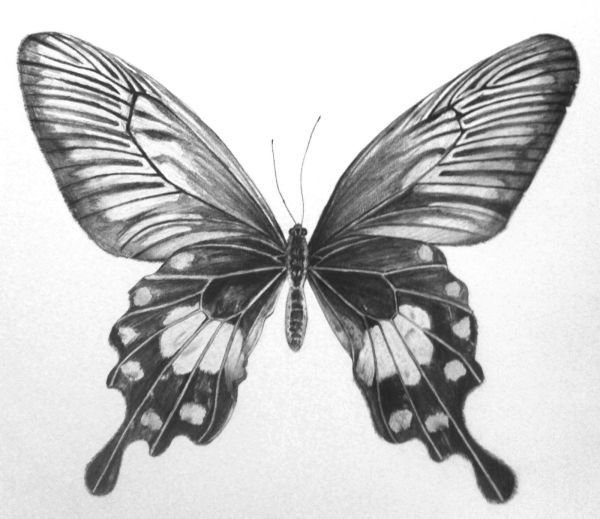 Pencil analytical drawing Butterflies Pinterest Drawings