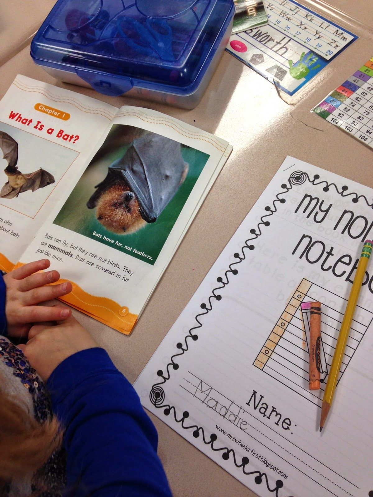 Nonfiction Text Features In 1st Grade