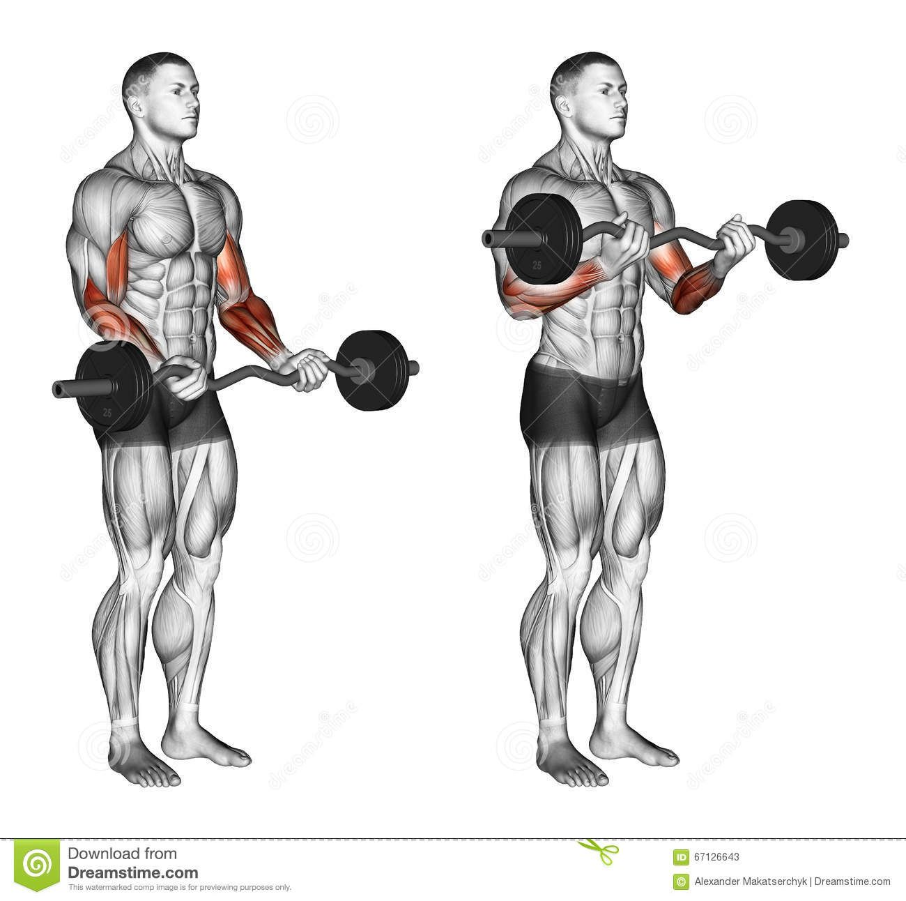 Exercising Ez Bar Curls