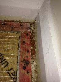 What do carpet moths look like? ~ Art of Clean - UK ...