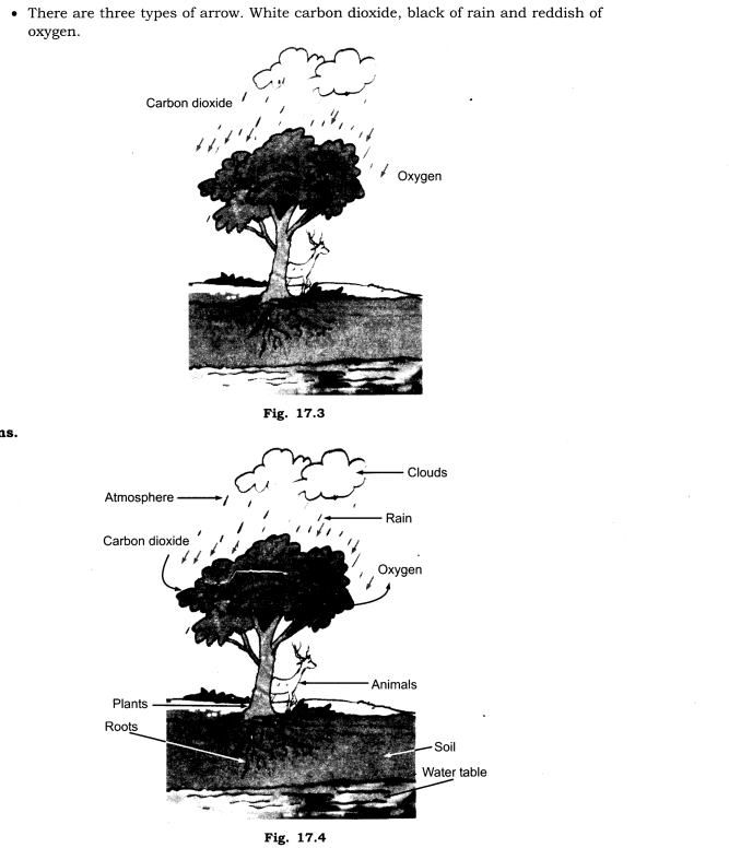 NCERT Solutions Class 7 Science Chapter 17 Forests Our