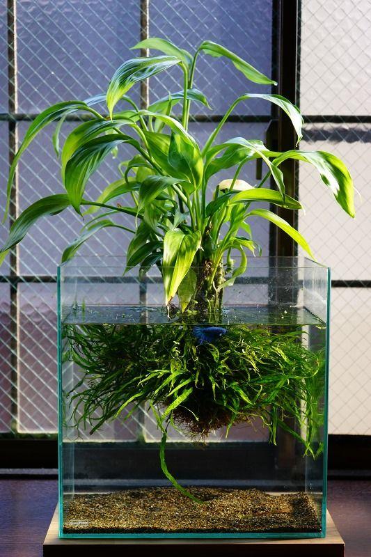 Indoor Floating Water Plants
