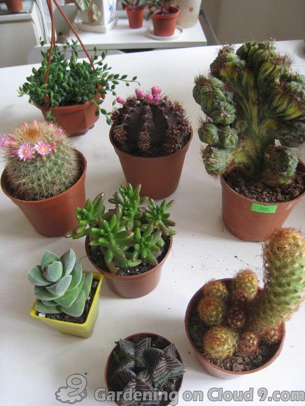 Indoor Garden Gallery Of Tabletop Container Garden Cactus Garden