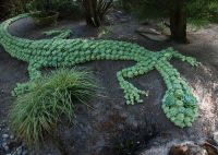Succulent lizard made by our friends at Costa Farms