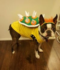 Super Mario Brothers Bowser dog Halloween costume | Dog ...