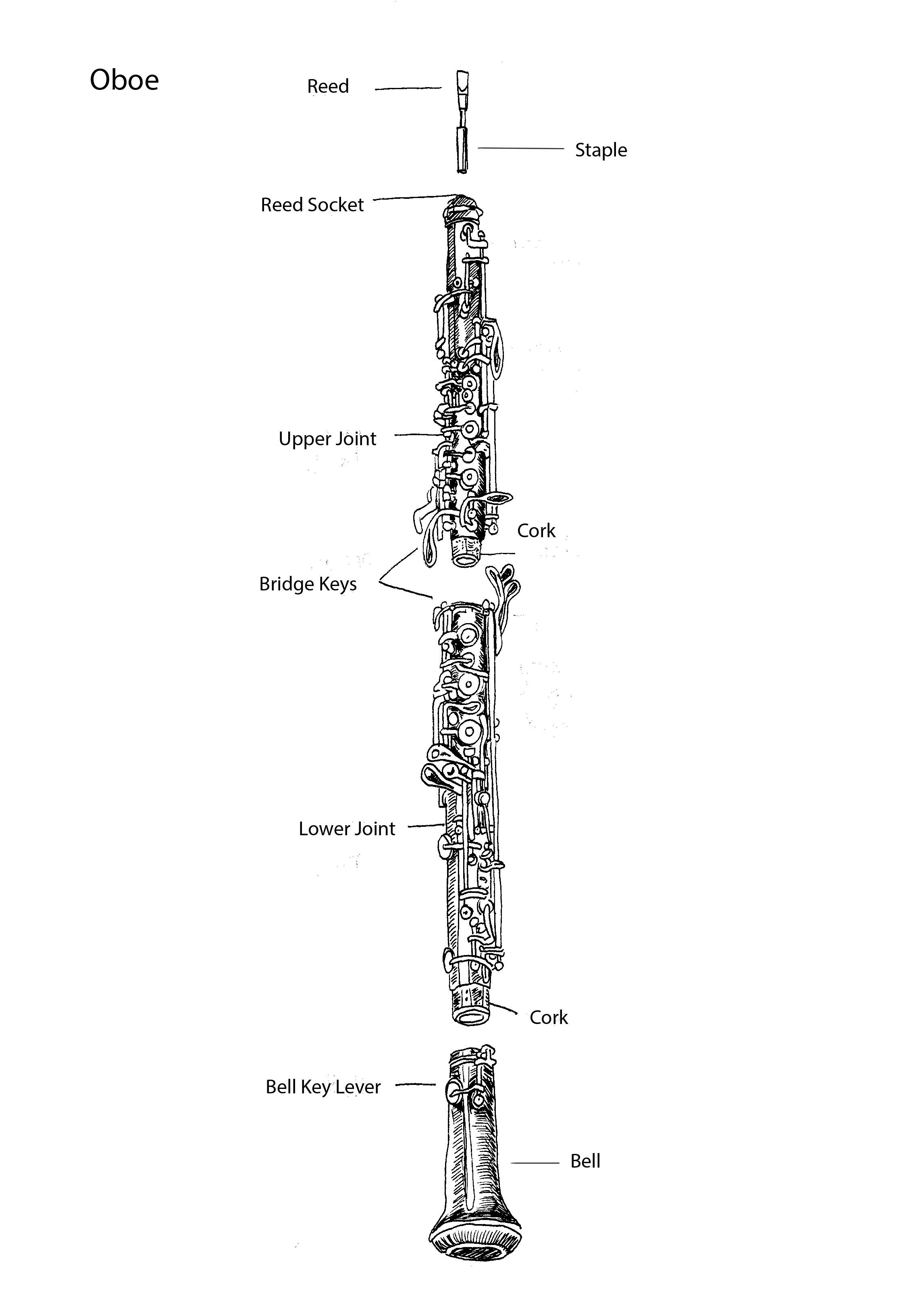 Parts Of The Oboe By Tracie Noles Ross