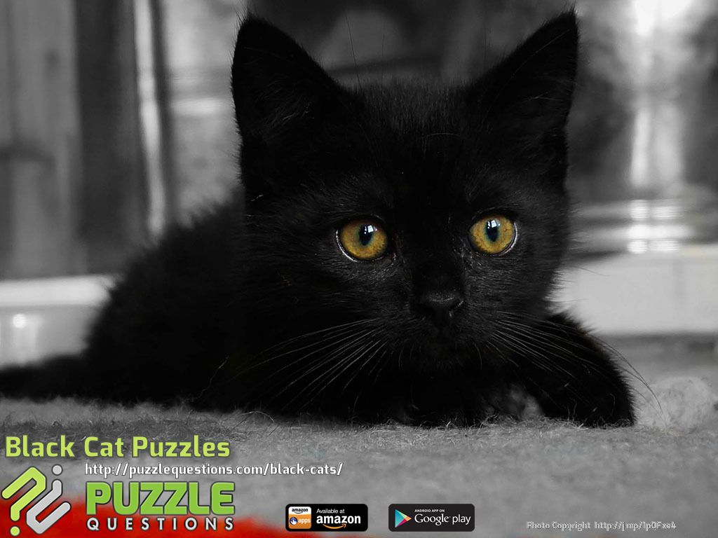 black cat puzzles | cute kittens and cats pictures | pinterest