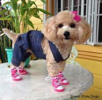 poodles dress up - Google Search | Dogs ... Dogs ... Dogs ...