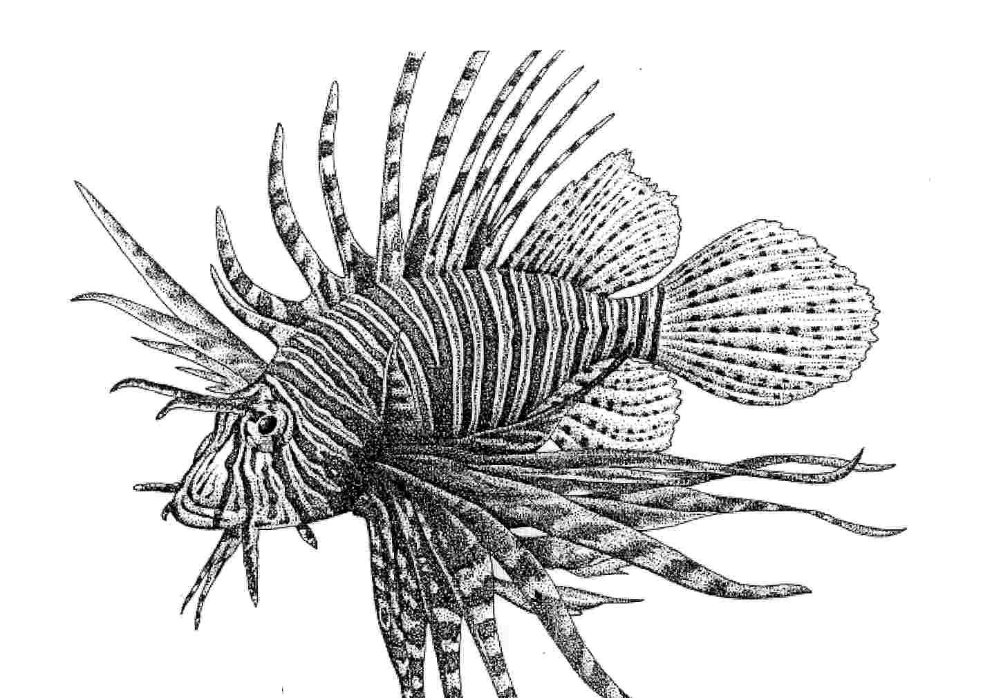 Lionfish Illustrations