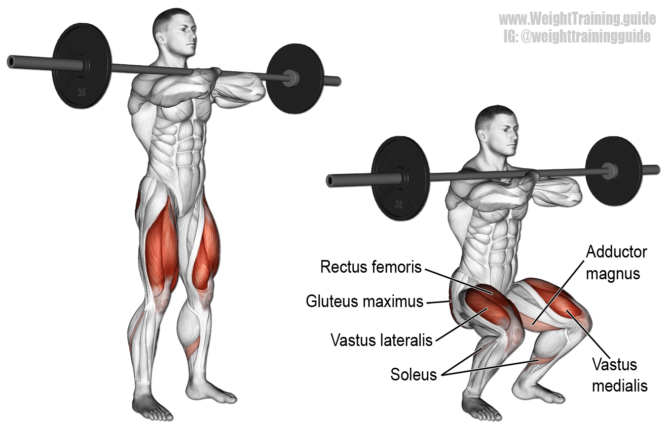 Barbell Front Squat A Major Compound Exercise That S