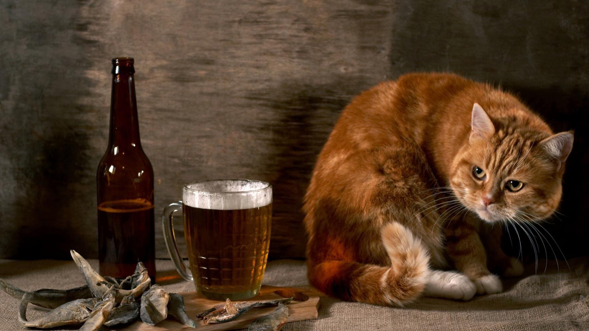 the drunker cat wallpaper   suyoon   pinterest   funny animal