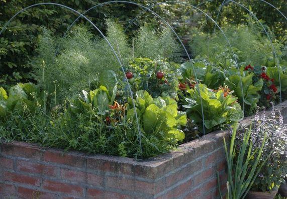 Ein Mit Gemusepflanzen Und Krautern Bepflanztes Hochbeet Das Aus Ziegelsteinen Gemauert Ist