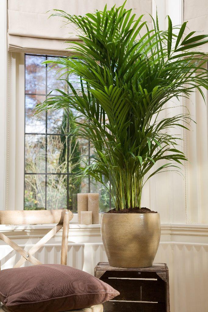 grote kamerplanten  Google Search  Kamerplanten