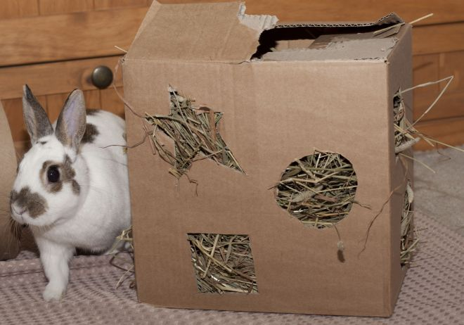 Bunny with a box filled with hay i love the idea
