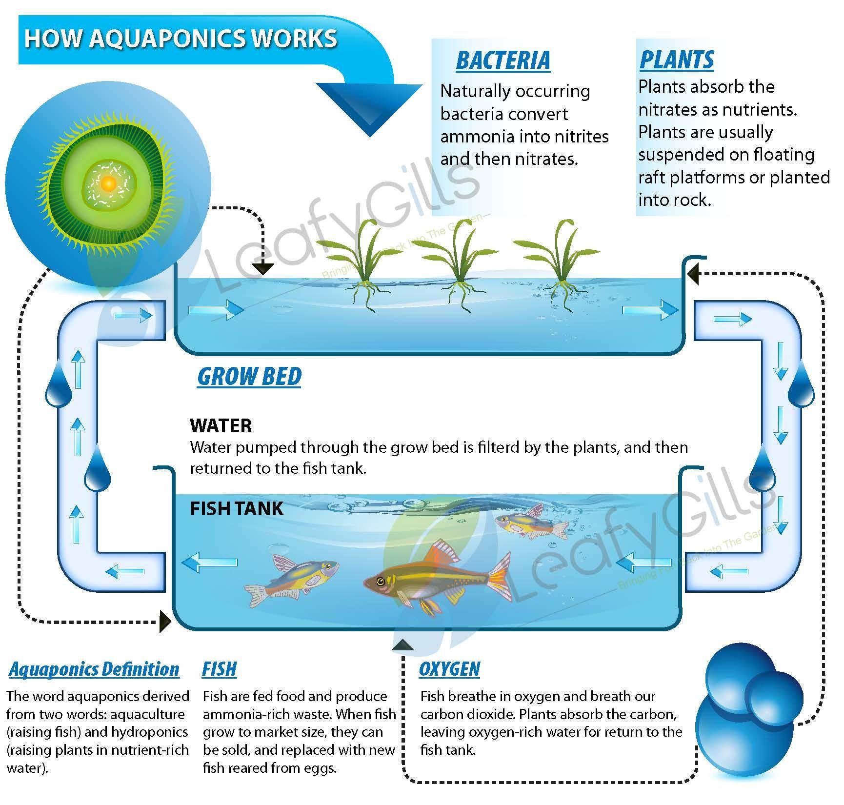 Hydroponic Gardening Fish Diagram