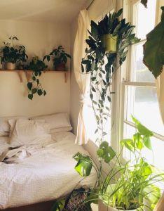 Gypsyaya plants in bohemian bedrooms also home ideas pinterest rh