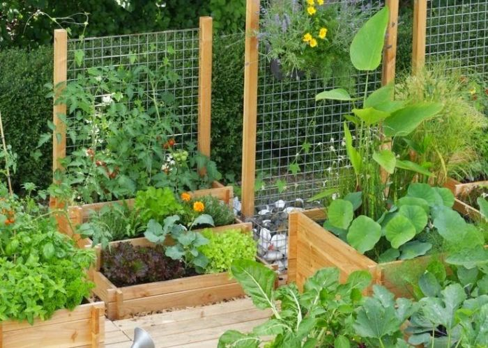 Raised bed gardens with trellis for vertical growing diy garden also backyard