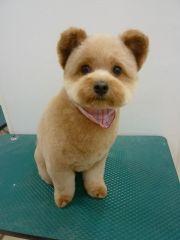 dog haircuts fade haircut