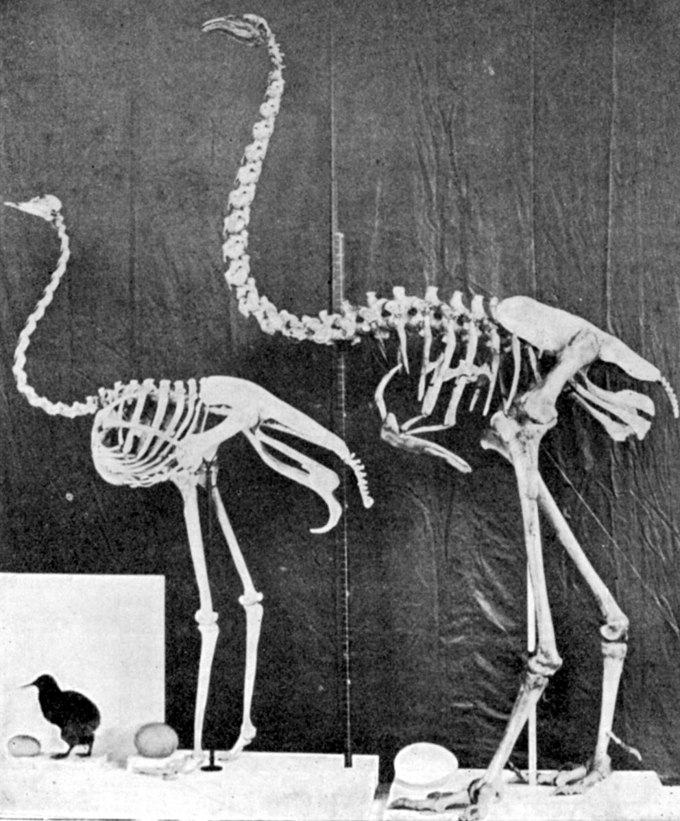 ostrich skeleton diagram wiring subwoofer