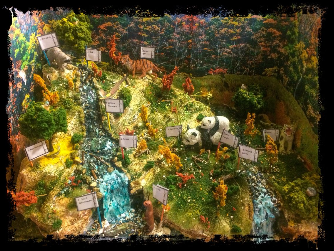 Diorama Of Chinese Temperate Deciduous Forest5th Grade