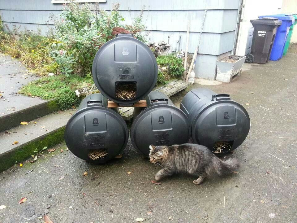 Feral cat shelter feral cat shelters and eating stations