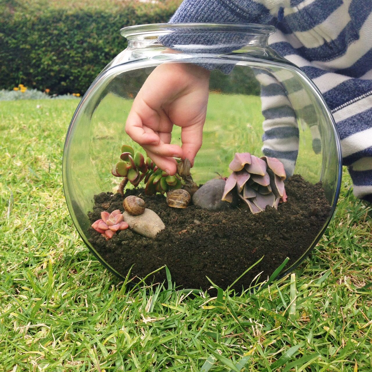 How To Make A Snail Terrarium