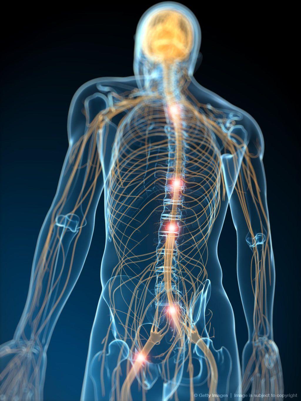Image Detail For Human Nervous System Computer Artwork