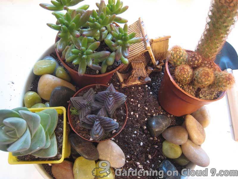 Indoor Cactus Garden Ideas Ideas Plantas Pinterest Gardens