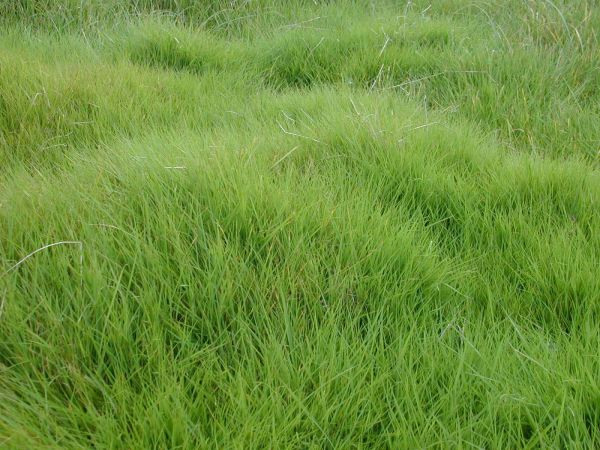 20+ Meadow Grass Plan Photoshop Pictures and Ideas on Meta Networks