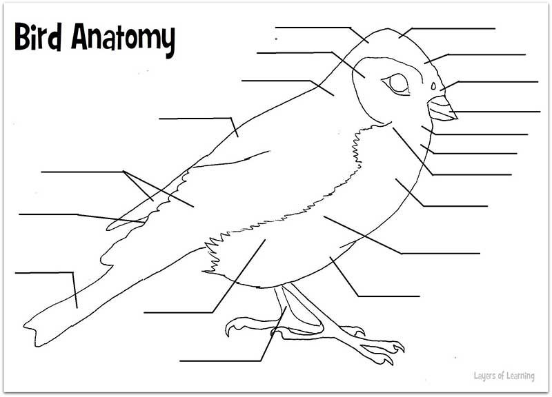 Bird anatomy worksheet to fill out. You need to know the