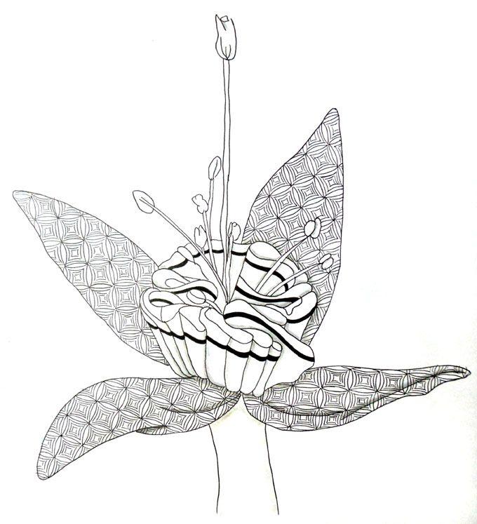 Gallery For > Unusual Flower Drawings