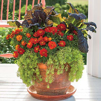 Fall Container Garden Ideas Google Search Gardening And Out