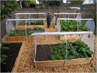 raised bed vegetable garden layout | Raised Bed Vegetable ...