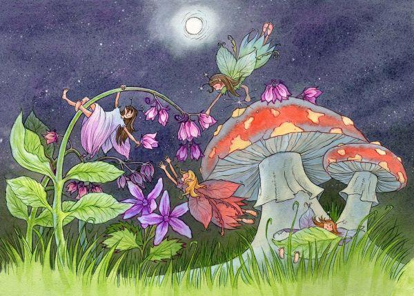 Woodland Fairies Illustrations