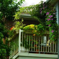 The 6x8 garden: Balcony garden inspiration  Clematis ...