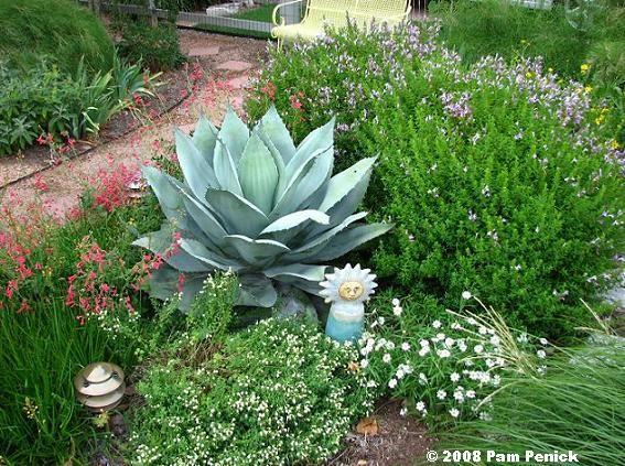 Agave & Mexican Oregano Dream Mexican Garden Pinterest The