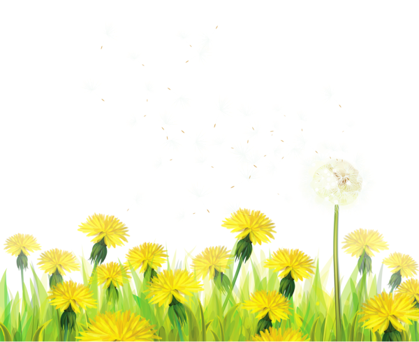 Black And White Daisy Clip Art Transparent Background