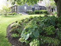 Front yard around pine tree | outdoor ideas I love ...