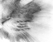 drawing realistic hair and fur