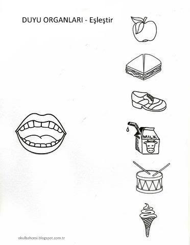 *: Duyu Organlarımız * Boyama Sayfaları / Eşleştirme